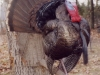 Johnston_Missouri_Gobbler_Front