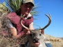 Trophies Mexico Coues Deer