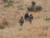 Coues-Descent-for-3-Tired-Hunters