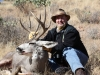 Bill-Side-of-Desert-Mule-Deer