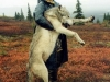 Carrying_Wolf