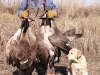 Todd_and_Benelli