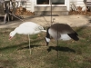 Big-Flock-Decoys